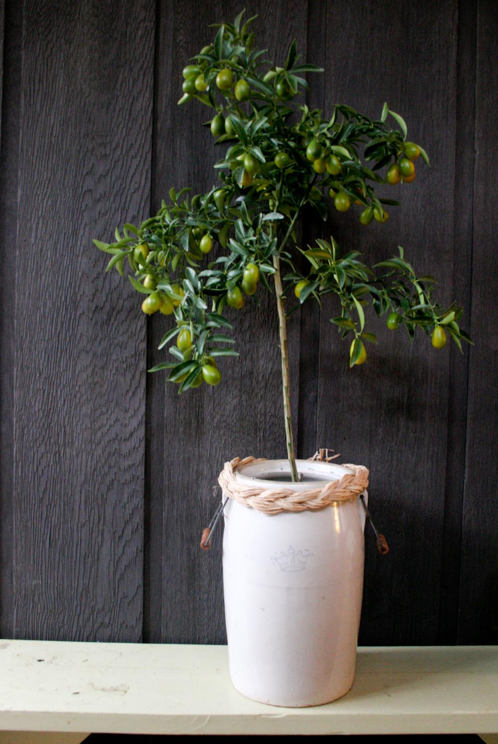 holiday_potted kumquat-7952.jpg
