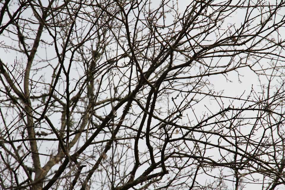KB_winterlines-7885.jpg