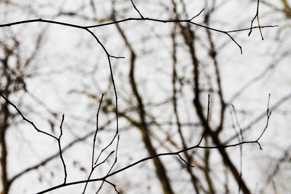 KB_winterlines-7865.jpg