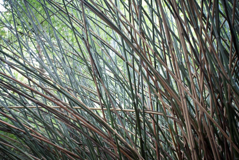 bamboo-9230.jpg