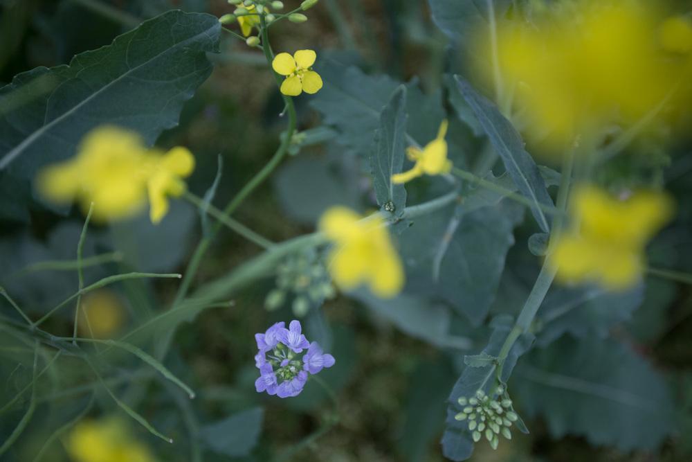 meadow-9051.jpg