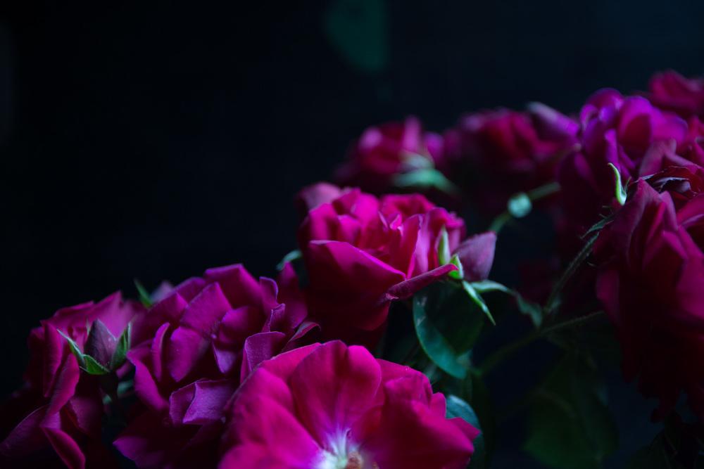 red roses-9774.jpg