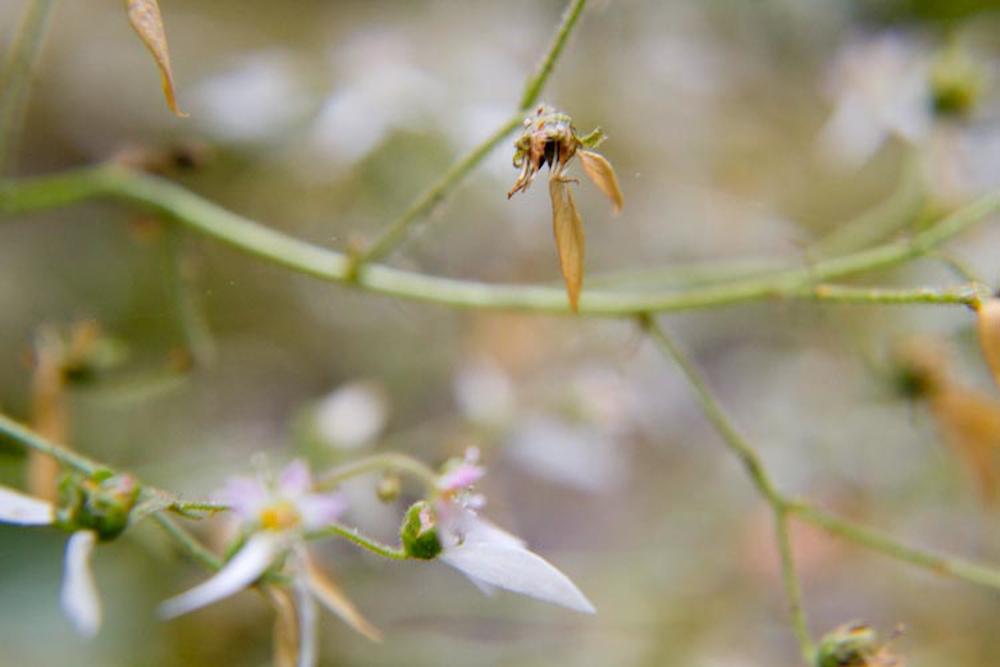 geranium-45.jpg