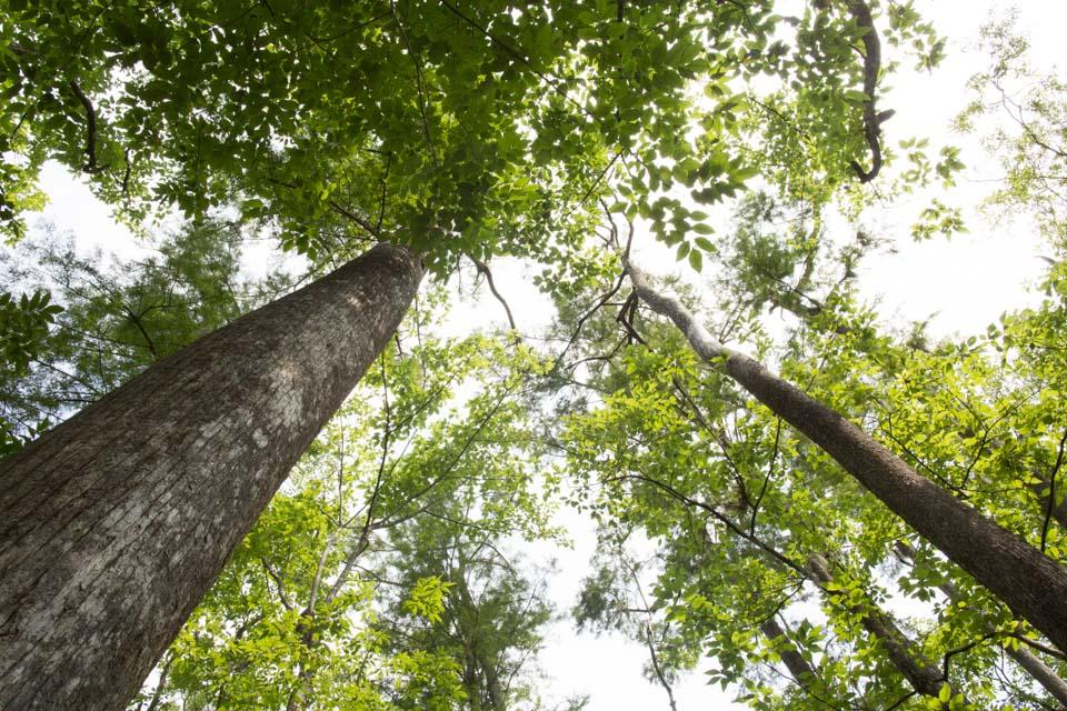 KB_cypress-canopy-9571.jpg