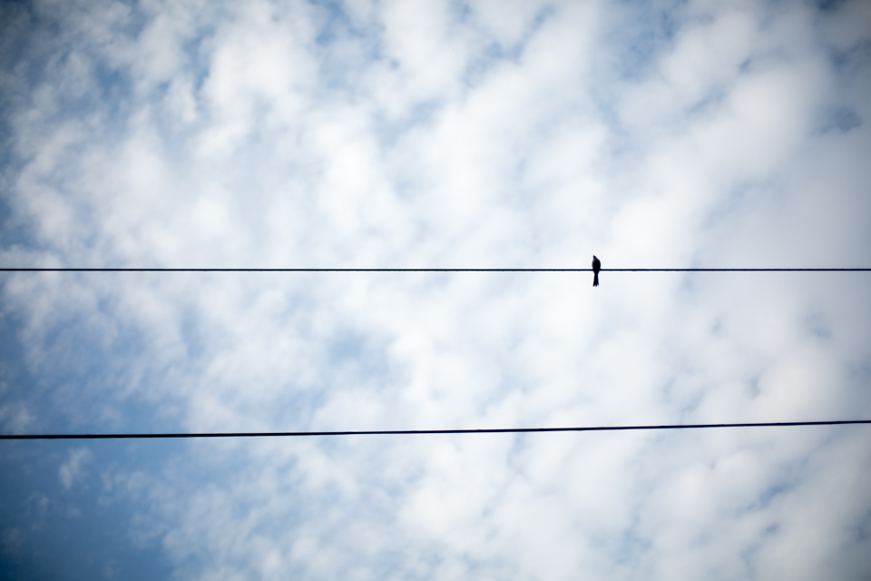 KB_bird-on-a-wire-0289.jpg