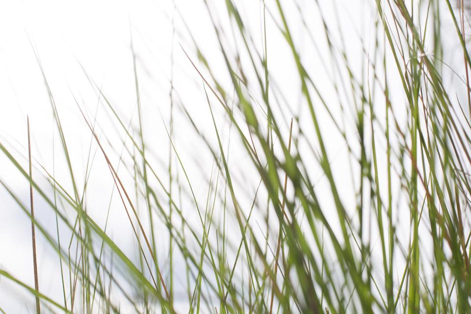 KB_beach-grass-9205.jpg