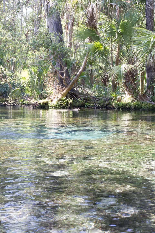 KB_chassahowitzka-river-springs-5967.jpg