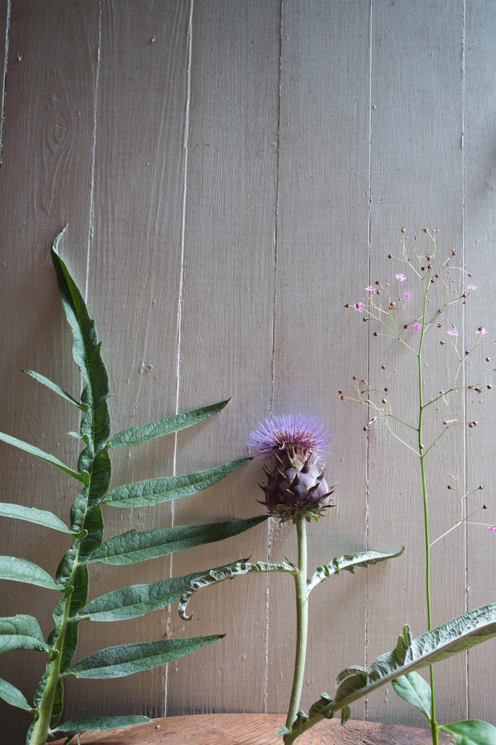 cardoon and jewels-9887.jpg