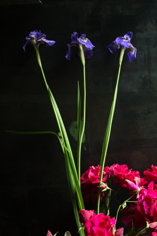 iris-9797.jpg