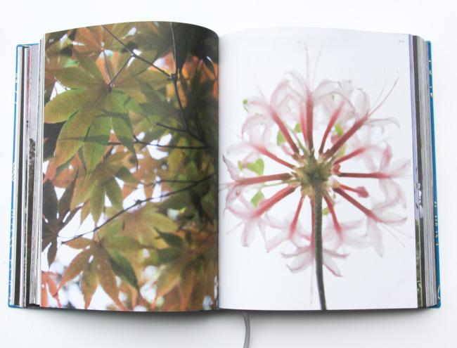 beautyeveryday-bookpage-3762.jpg