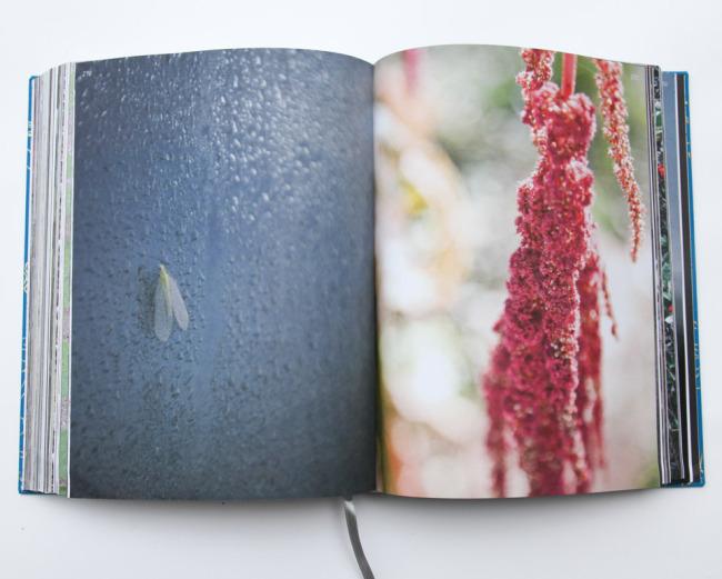 beautyeveryday-bookpage-3767.jpg