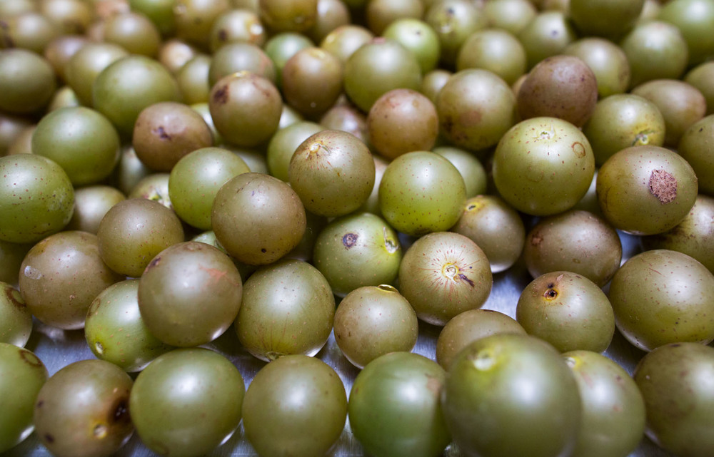 scuppernongs-5413.jpg