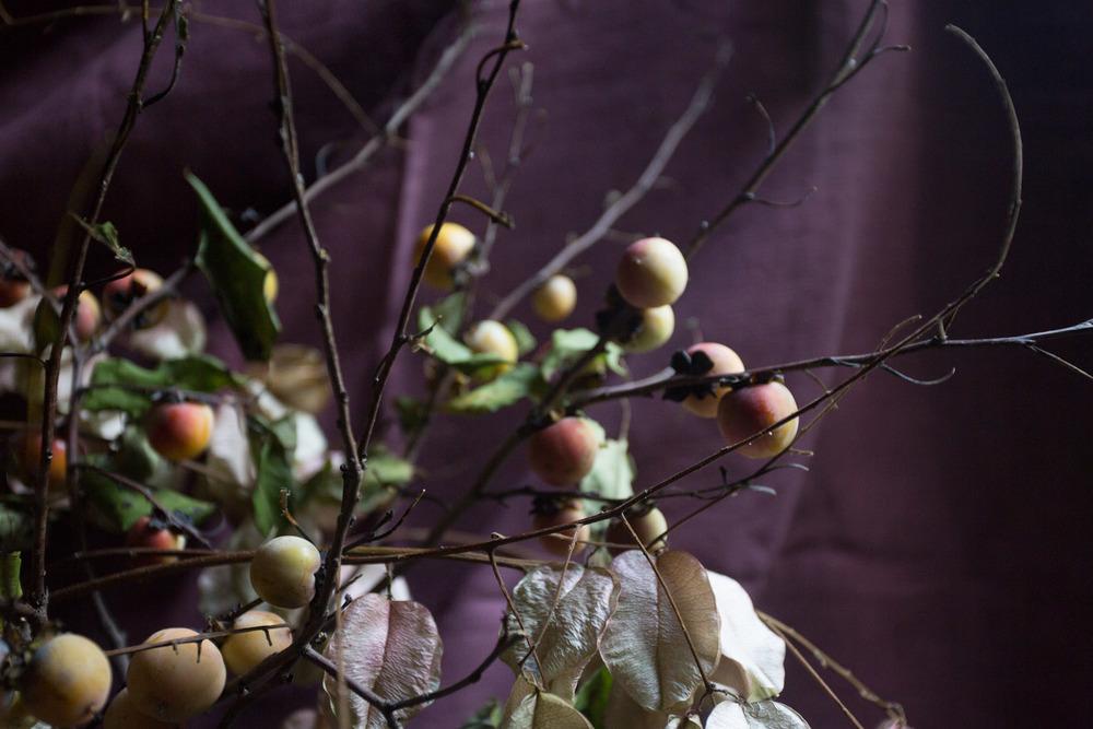 rain tree + persimmons-9895.jpg