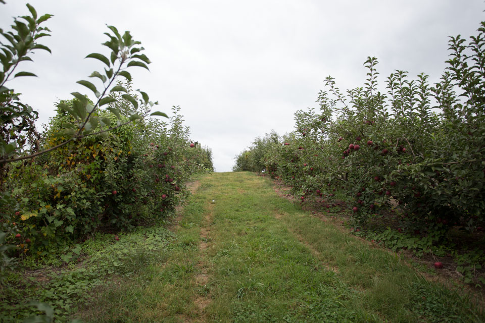 KB_apple-pickin'-2321.jpg