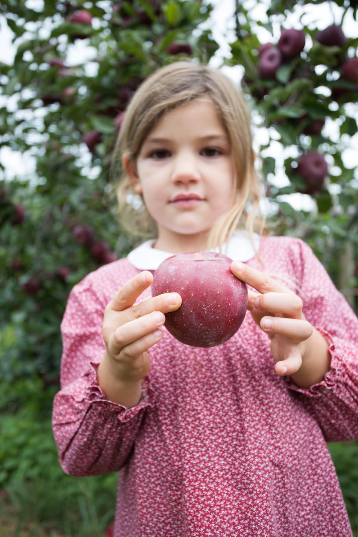 KB_apple-pickin'-2317.jpg