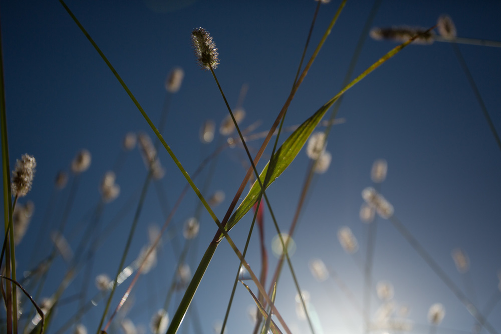 fall grasses-0363.jpg