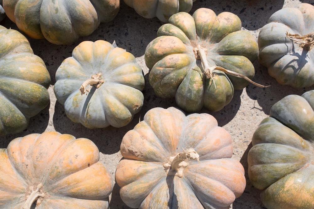 autumn pumpkins-7398.jpg