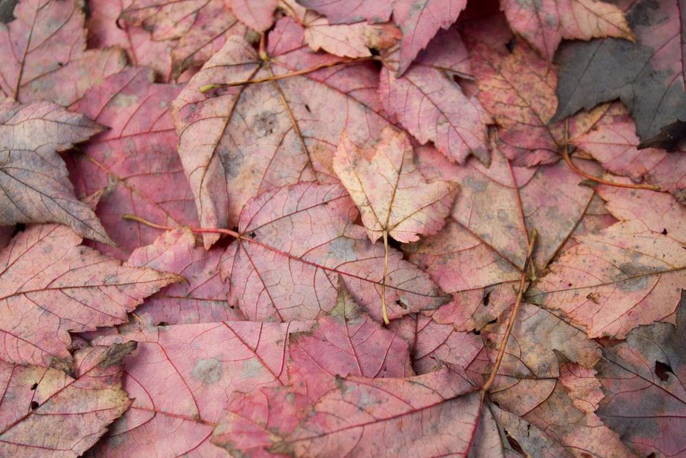 fall color-7905.jpg