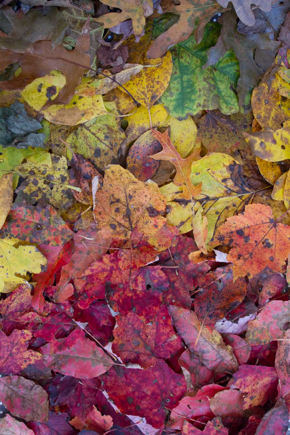 gradiated_colors_forest-7959.jpg