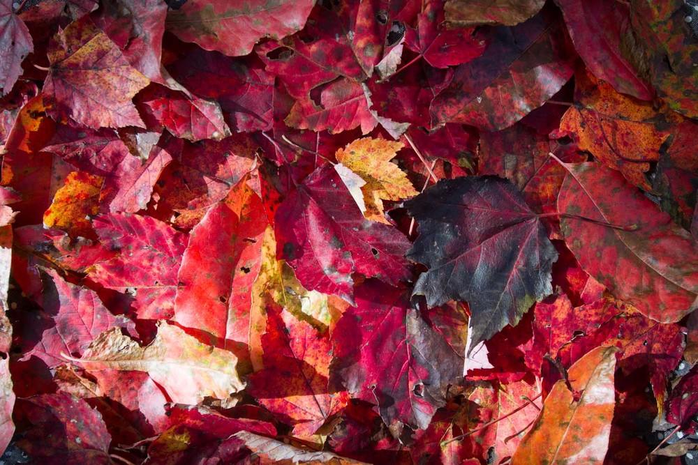 fall color-7939.jpg