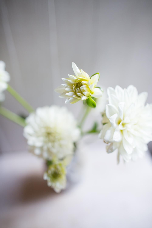 white-6683.jpg