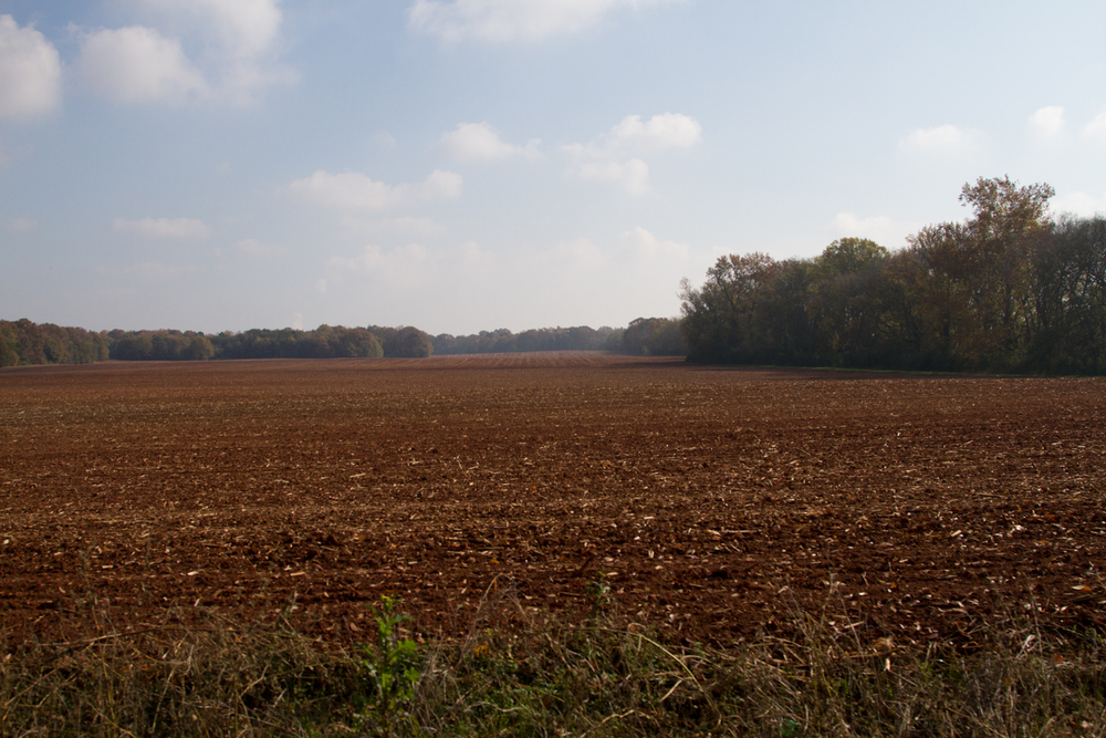 fall field beauty-8893.jpg