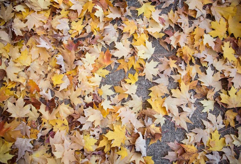 fallen leaves-7938.jpg