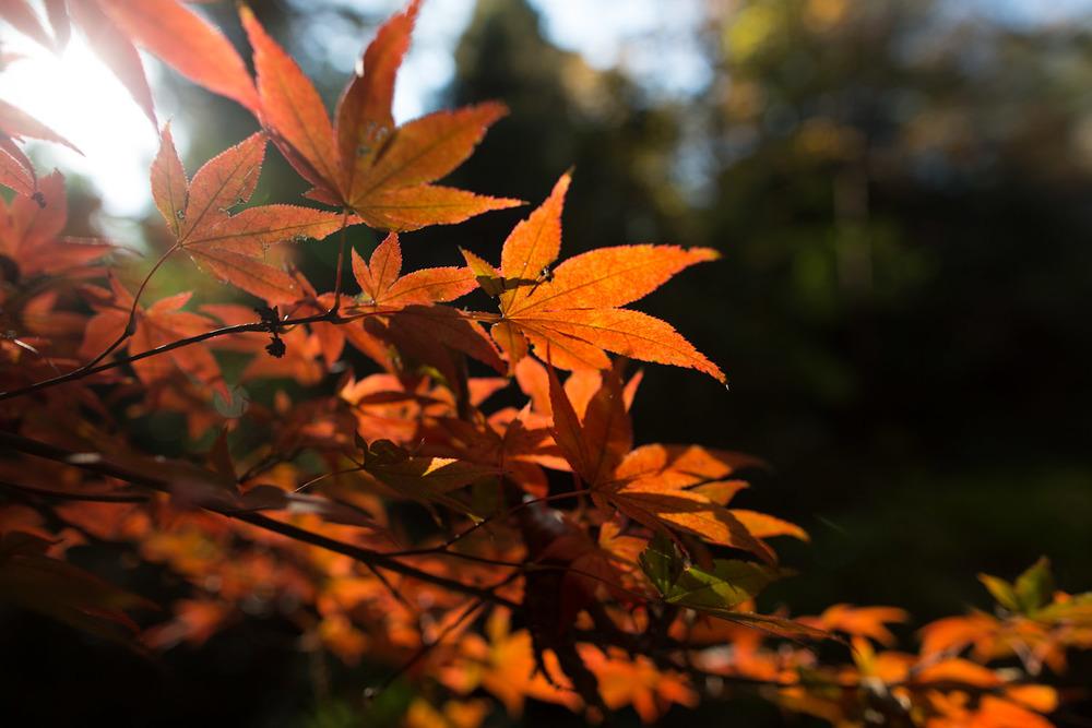 fallen leaves-7942.jpg