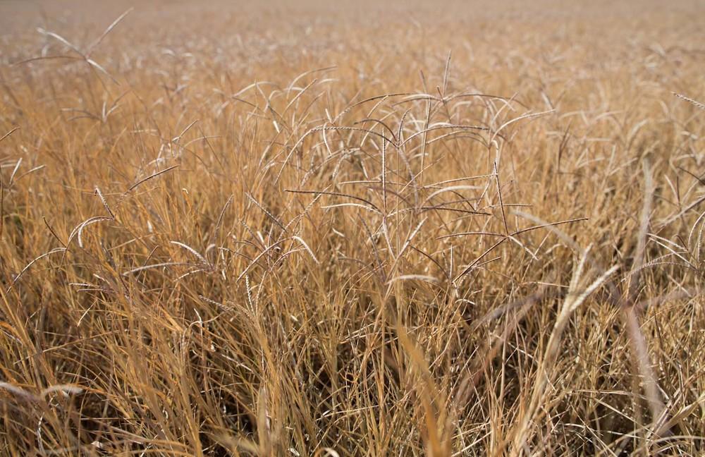 fall field-7635.jpg