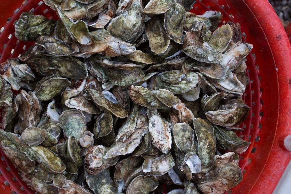georgia_oysters-8641.jpg