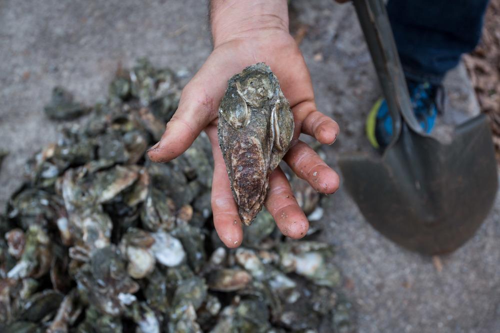 georgia_oysters-8608.jpg