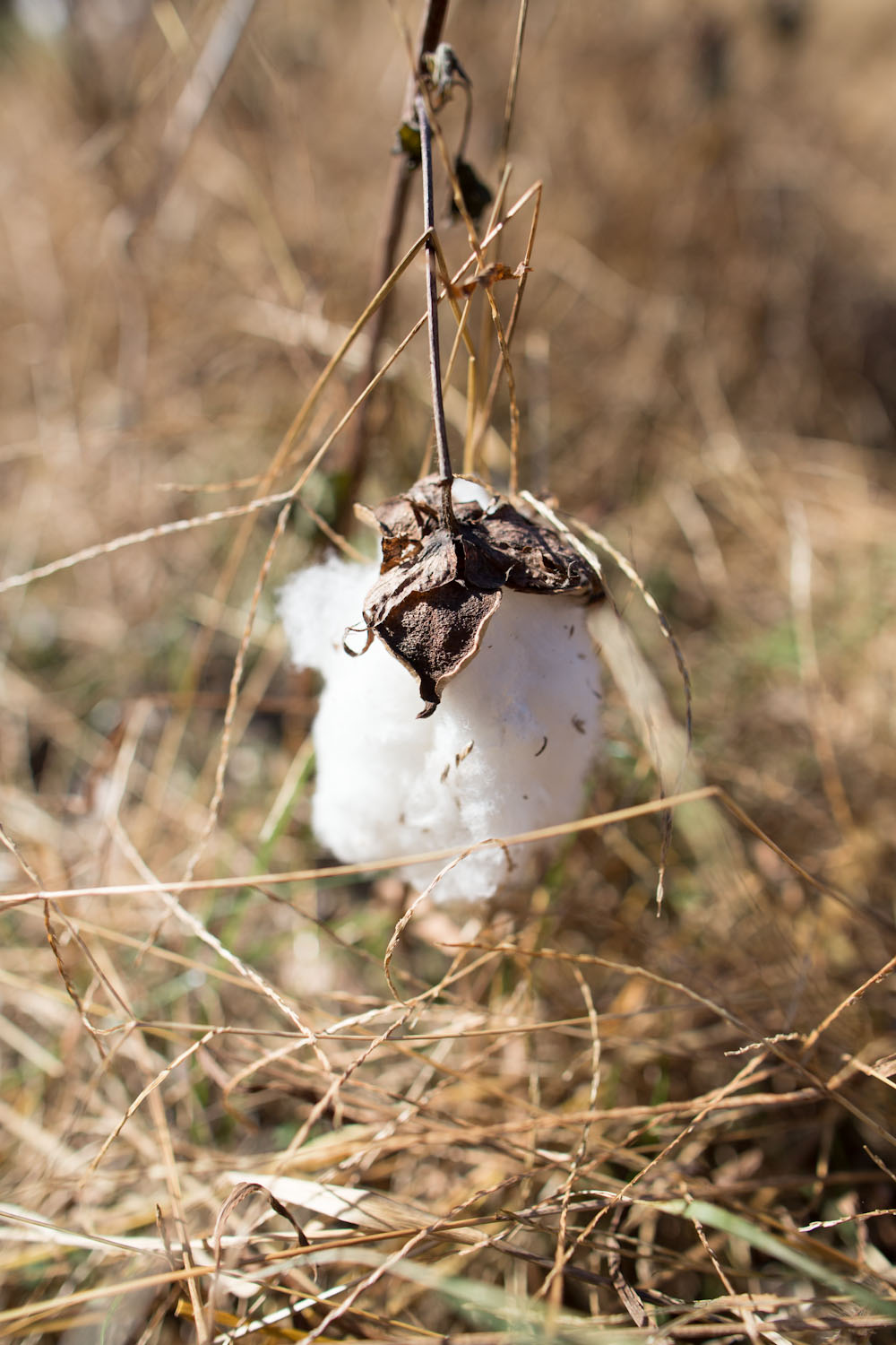 3 porch farm_cotton-7848.jpg