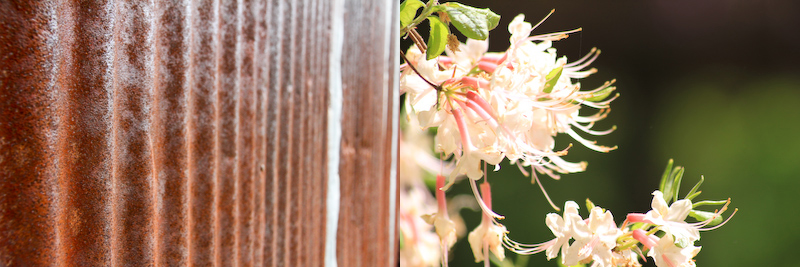 rustysiding.pinkblooms.jpg