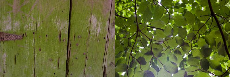 moss.greencanopy.jpg