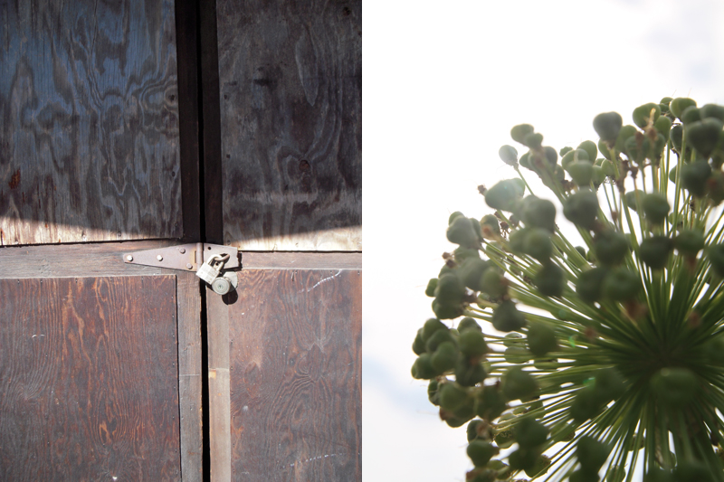 door-allium.jpg