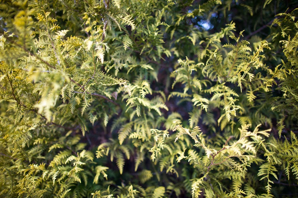 KB_winter-chartreuse-1359.jpg