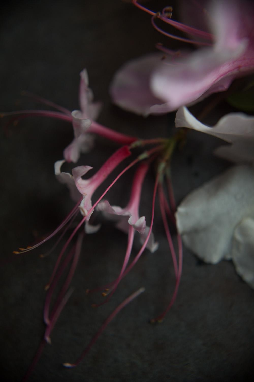 azaleas-9990.jpg