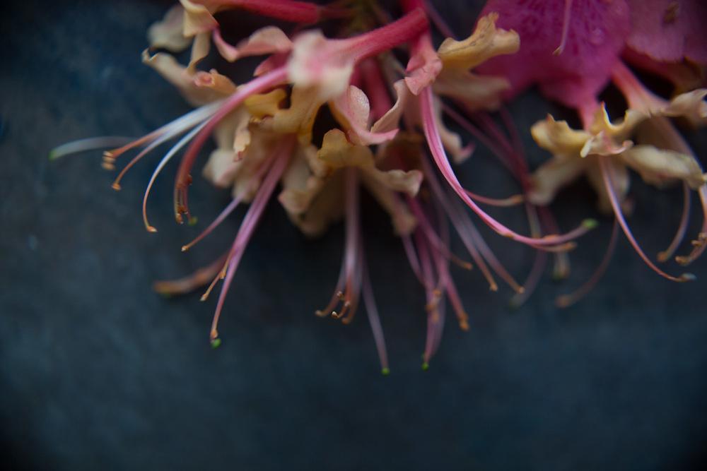 azaleas-9992.jpg