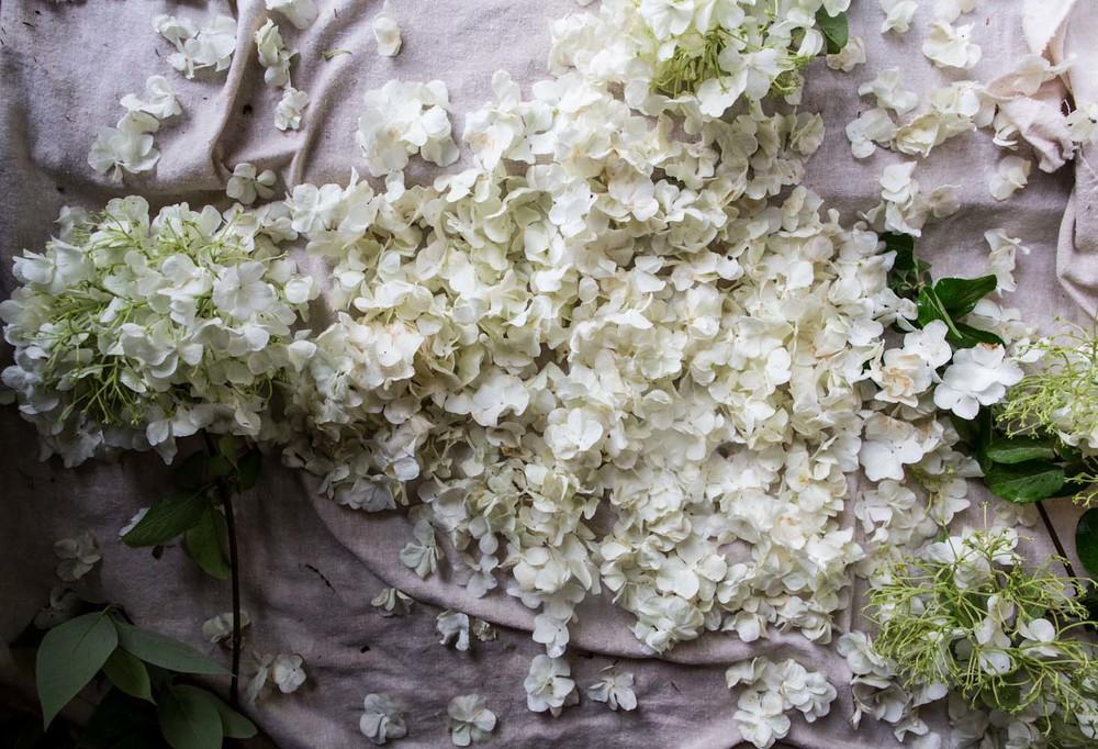 viburnum petal preserving-6272.jpg