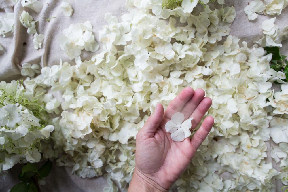 viburnum petal preserving-6279.jpg