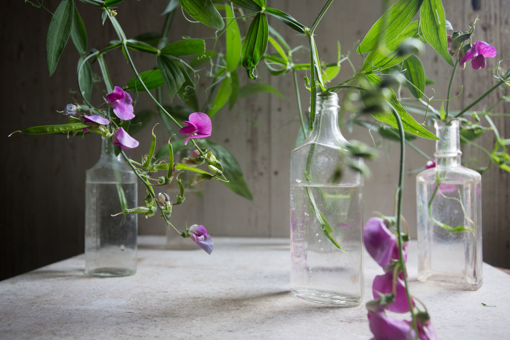 sweet peas-9603.jpg