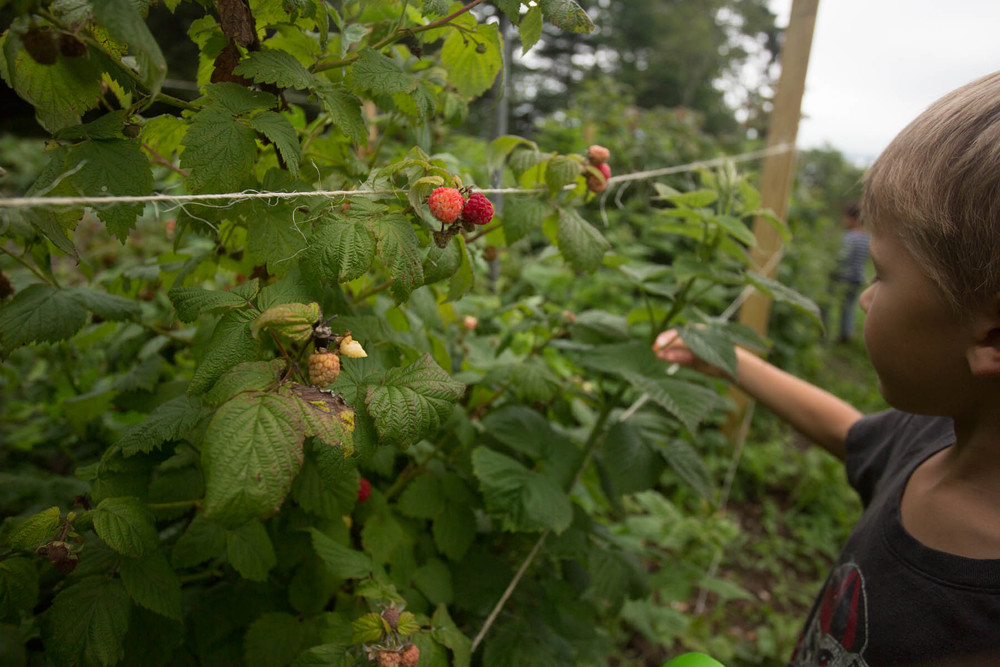 maine_raspberries-201507190034.jpg