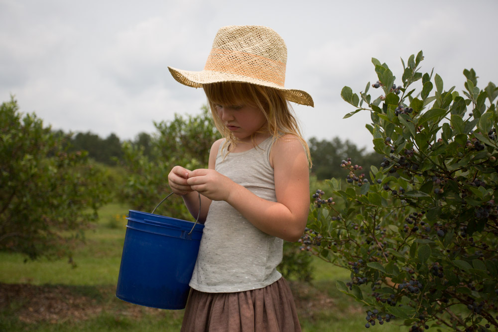 KB_blueberry-picking-8117.jpg