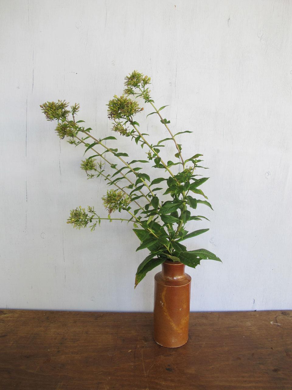 RW_dahlia bouquets-4211.jpg