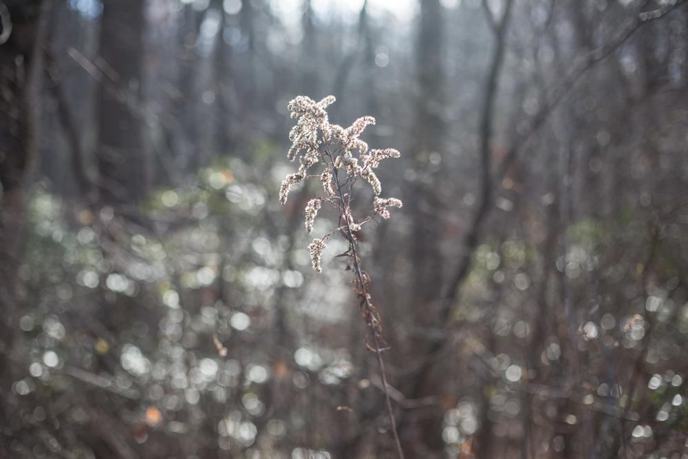 RA_approaching winter-201511250653.jpg