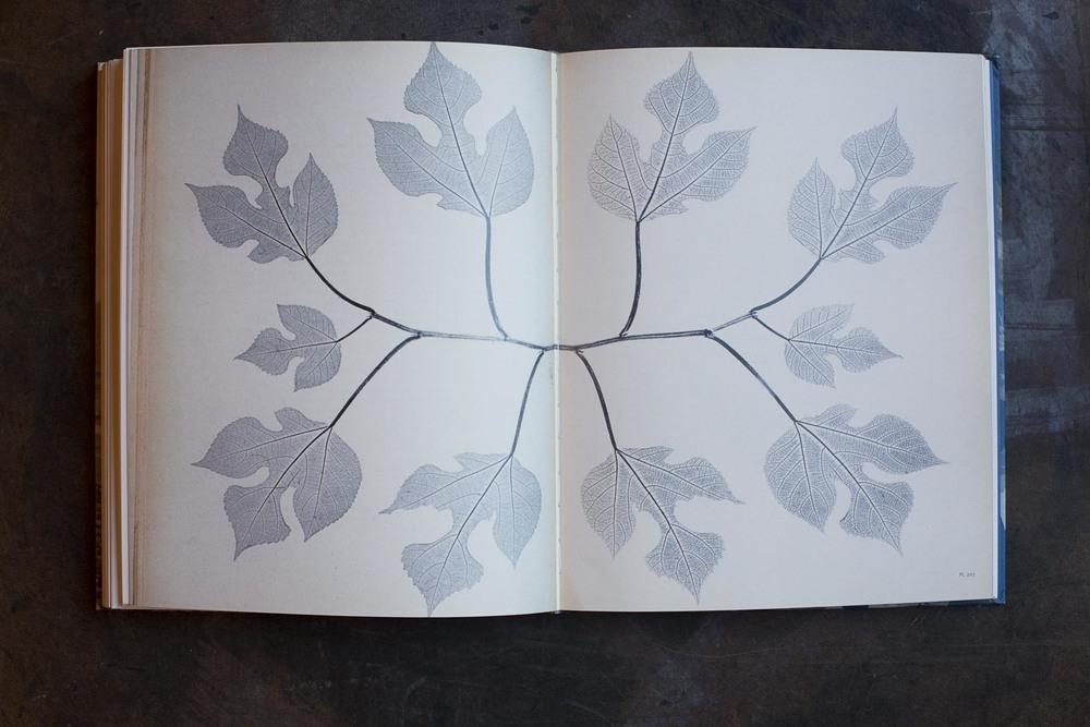 RA_fave books-IMG_2224.jpg