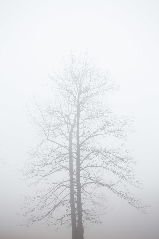 RA_tate in fog-201602206665.jpg
