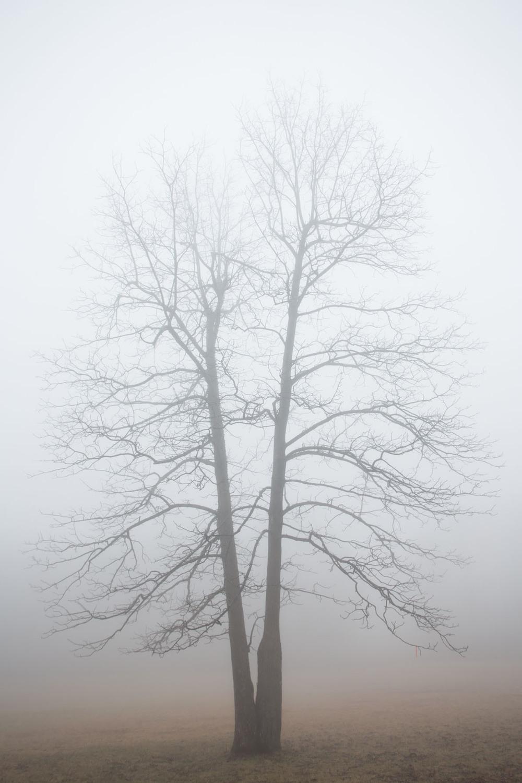 RA_tate in fog-201602206666.jpg