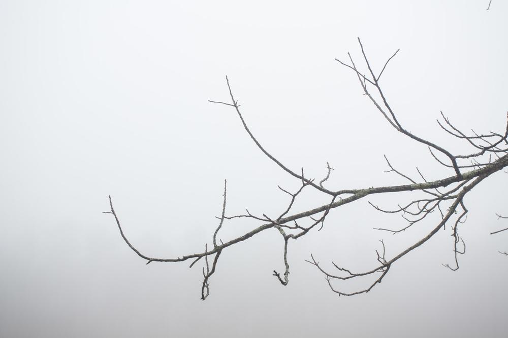 RA_tate in fog-201602206669.jpg