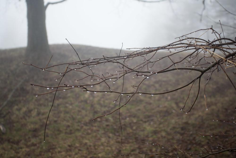 RA_tate in fog-201602206671.jpg